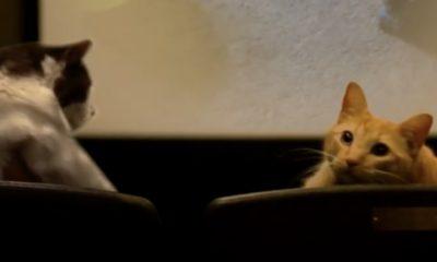 Cat Film Festival