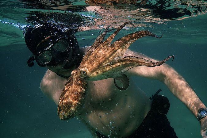 Film Festival My Octopus Teacher EarthxFilm