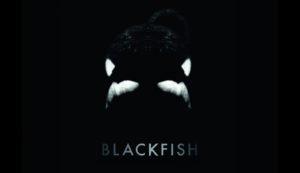 Blackfish Films Against SeaWorld