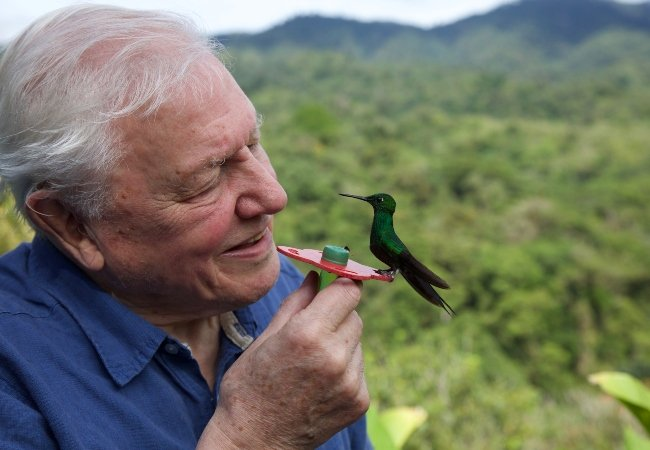 David Attenborough Life in Color Netflix