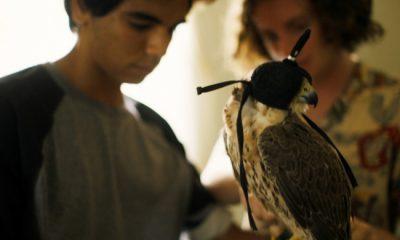 the falconer falcon scad