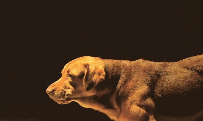 Bodie, one of the twin dogs that played protagonist Hagen