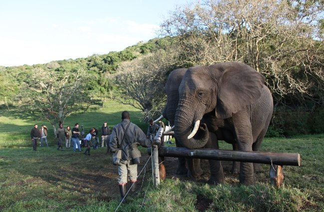 For a commercial, Green Shoot Films used orphaned and rehabilitated elephants from a sanctuary, ensuring that location and animal usage fees went directly to the protection of the creatures. Courtesy of Green Shoot Films
