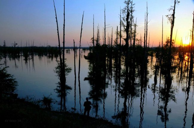 Sunset at a Louisiana swamp. Courtesy of Louisiana.gov